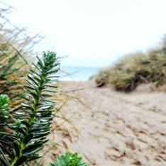 utah beach 6 juin debarquement de Normandie D DAY